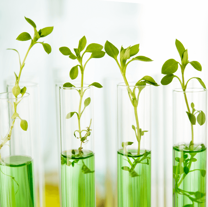 Tube à essais avec plantes