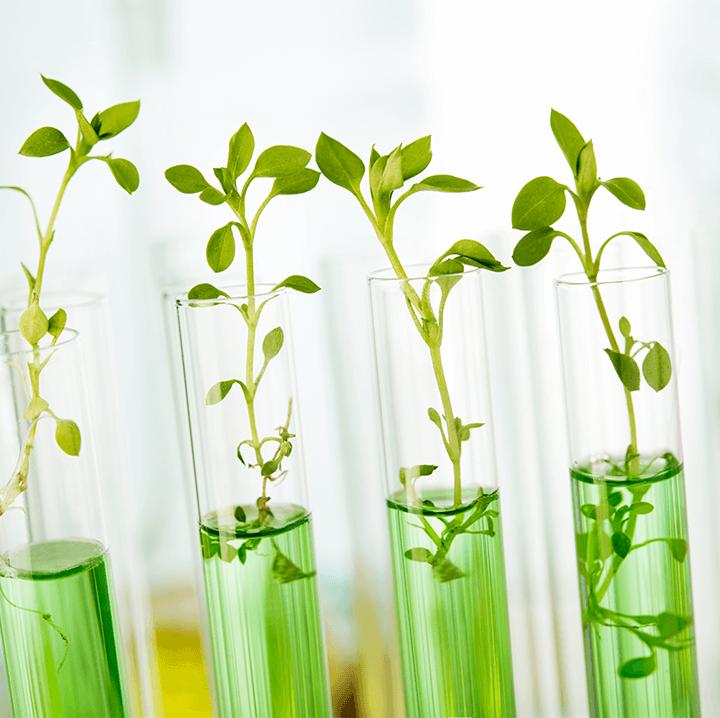 Tube à essais avec plantes travers